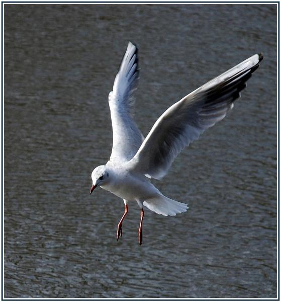 Soft Landing by trissie