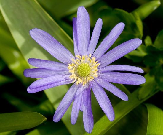 Purple sunshine by richard00
