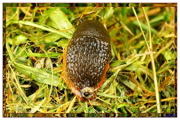 Slug off by looboss