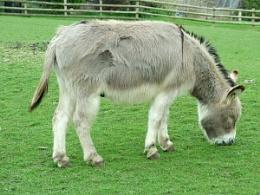 Donkey Power.