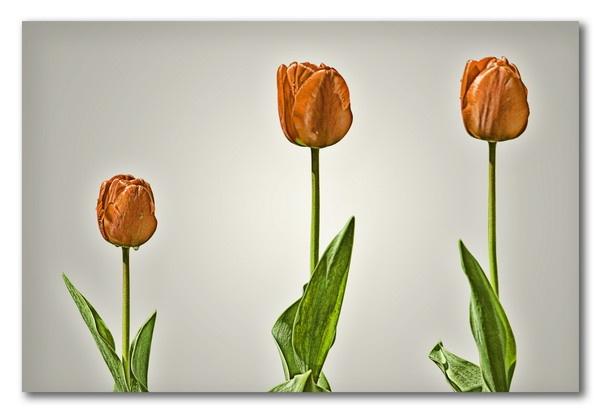 Tulips family by olesyak