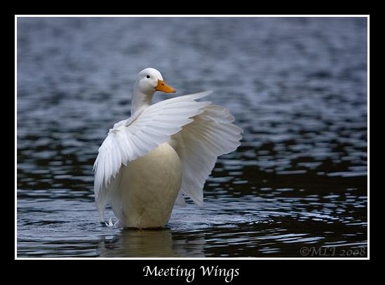 Meeting Wings by mialewis