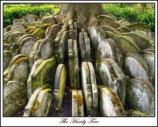 The Hardy Tree by andymac85
