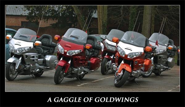 goldwings by ducatifogarty
