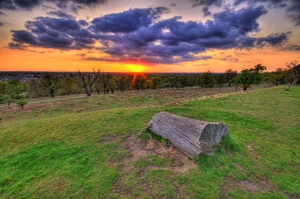 Richmond Park by jacekb