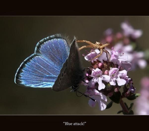 Blue Attack! by celestun