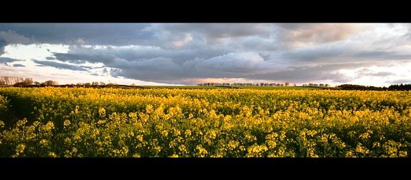 Fields of Change by ewanrayment