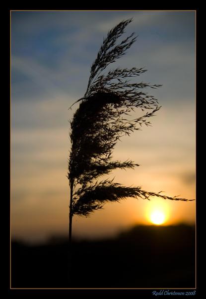Spring Light by RoddBC