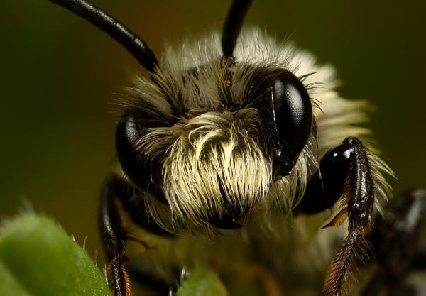 Miner Bee by alliec
