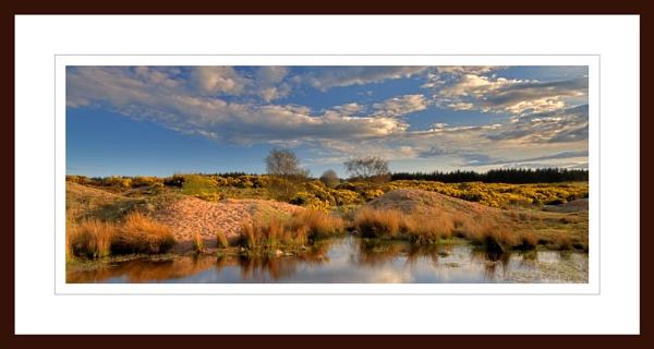 ABERDEEN - SCOTSTOWN MOOR IN MAY SUN by JASPERIMAGE