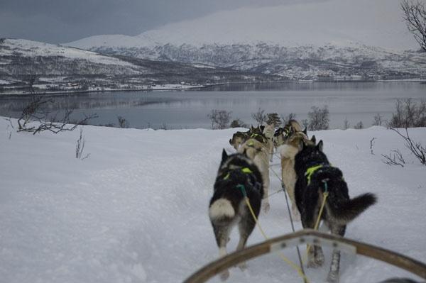 still dog sledding! by japa