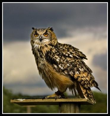 eagle owl by epoxy