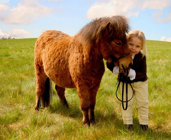 Not My Little Pony by happysnappa