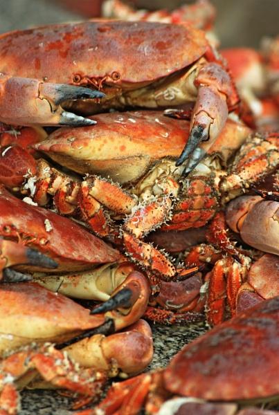 Crabs by Trogdor