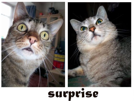 surprise by jaecat
