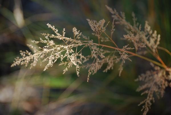 grass by Lindaephotozine