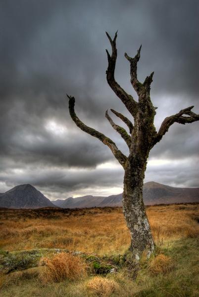 Rannoch Moor Tree by BubbaG2000