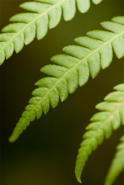 Fern Leaf by jammy_sam