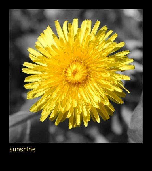 Sunshine by mindy73