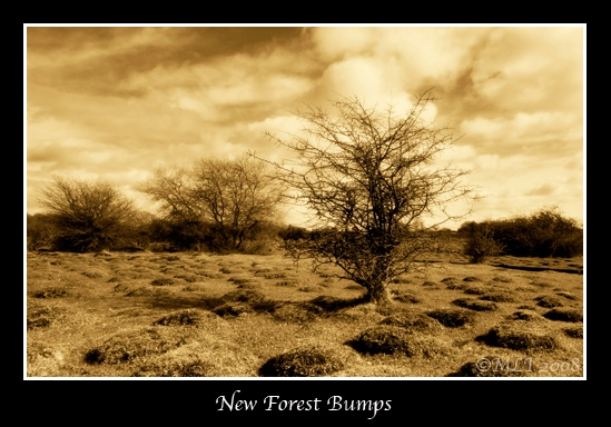 New Forest Bumps by mialewis