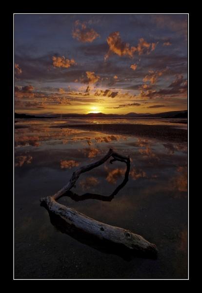 beached limb by JCRAWFORD
