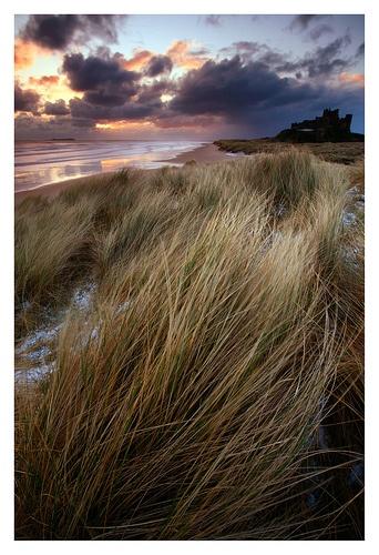 Bamburgh Grasses by paularthur