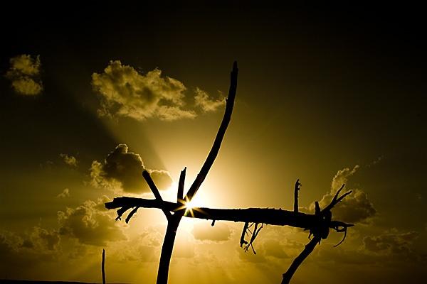 Driftwood Sunbeams by Alex_Scragg