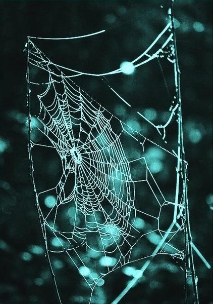 spider web by fasfoto