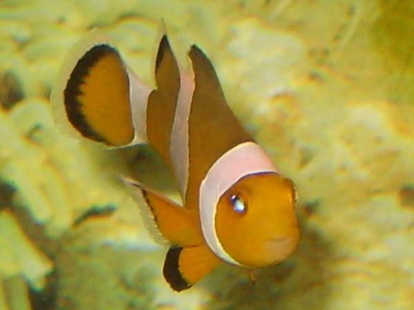 Nemo by Picturedude113