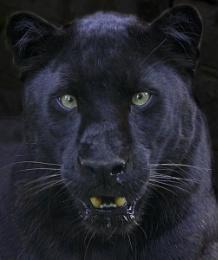 Black cat in a coal cellar, version 2