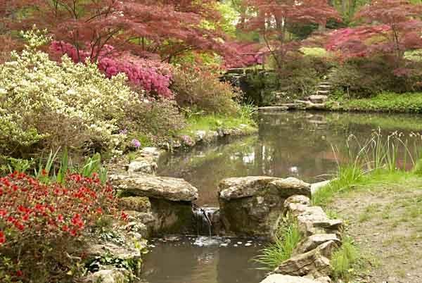 Exbury Spring by saxon_image