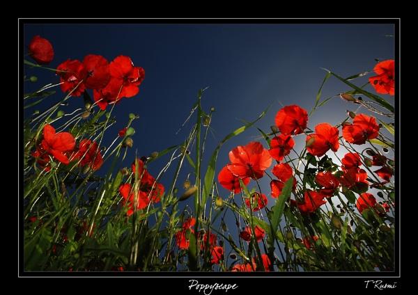 Poppyscape by rusmi
