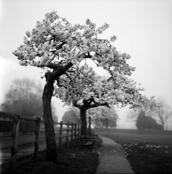 White Mist by Skatershrew