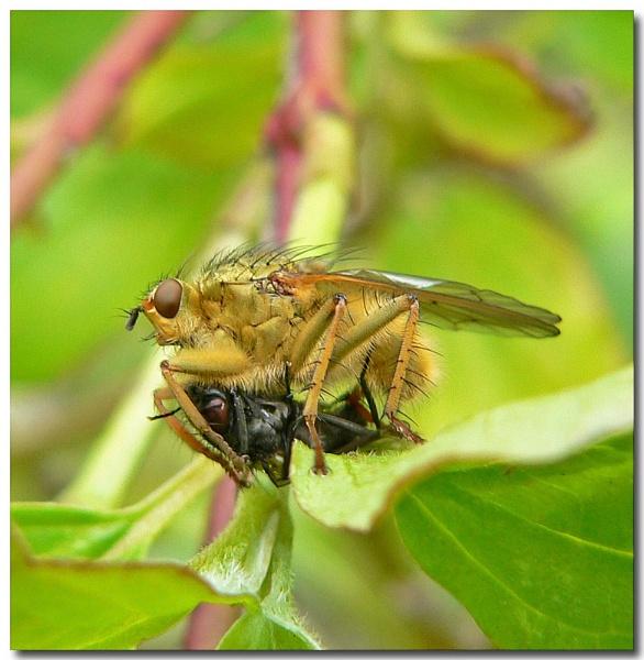 fly catcher by bunbeam