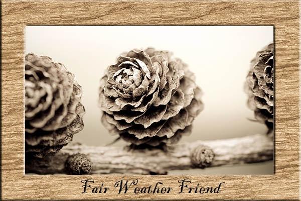 Fair Weather Friend by dormouse1976