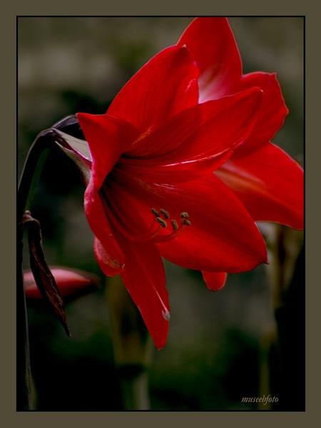 Red by museebfoto