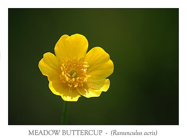 Build Me Up Buttercup ..... by NickBrandon