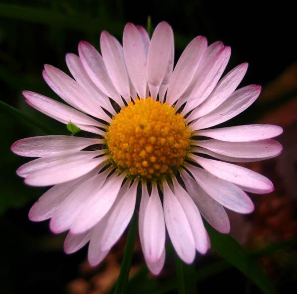 Ups a Daisy by Lois96