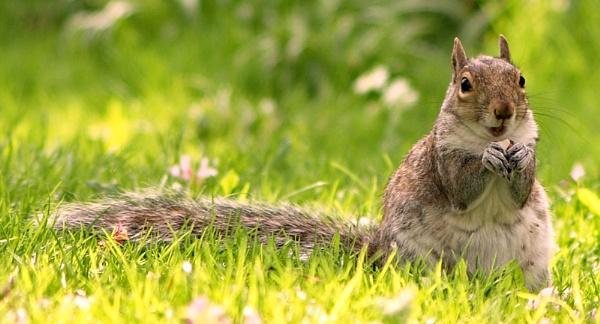 Squirrel by Trogdor