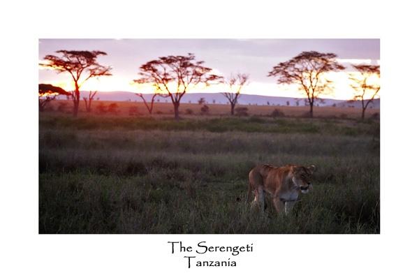 Serengeti by JakeK