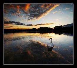 golden pond