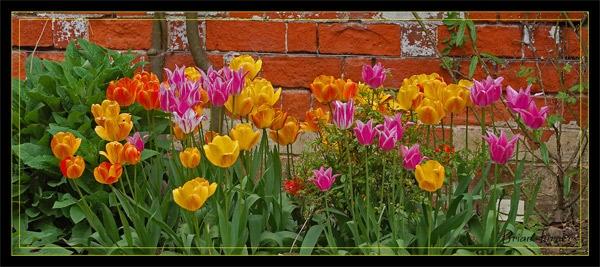flowerbed by ducatifogarty