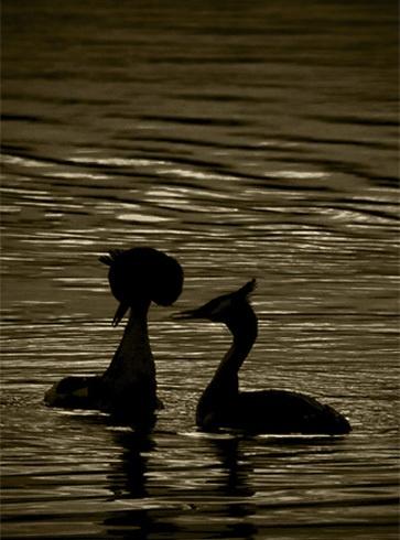 Dancing in the dark by ryanz