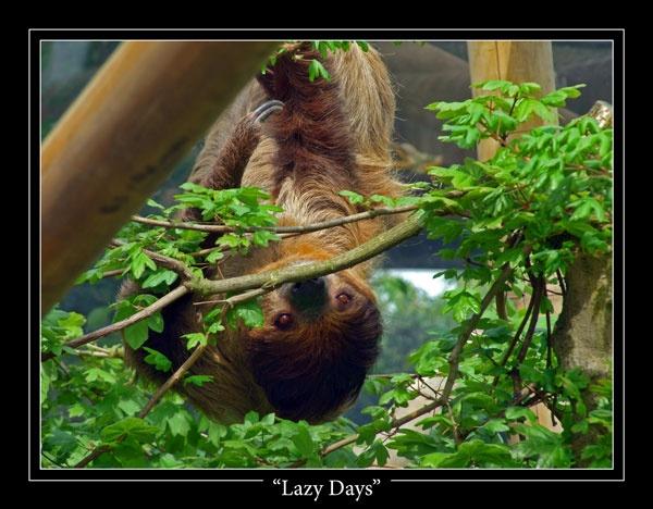 Lazy Days by playford
