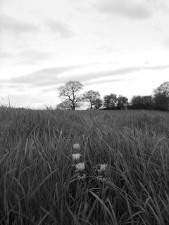 daisys by Aaronbousfield23