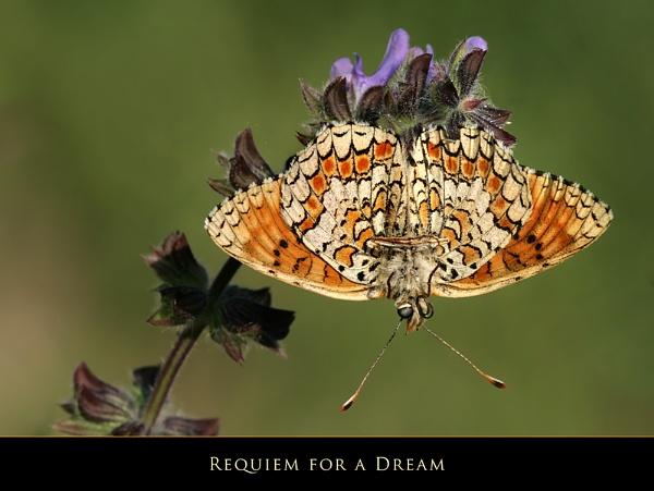 Requiem for a Dream by celestun