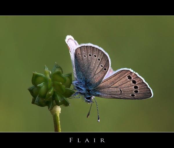 FLAIR by celestun