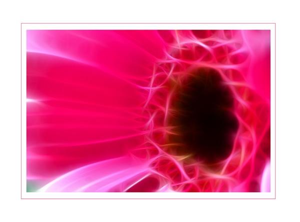 Fractal Flower 2 by SteveAngel