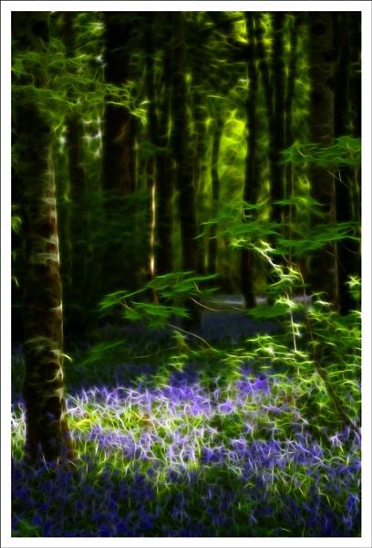 BlueBell Fractals by SteveAngel