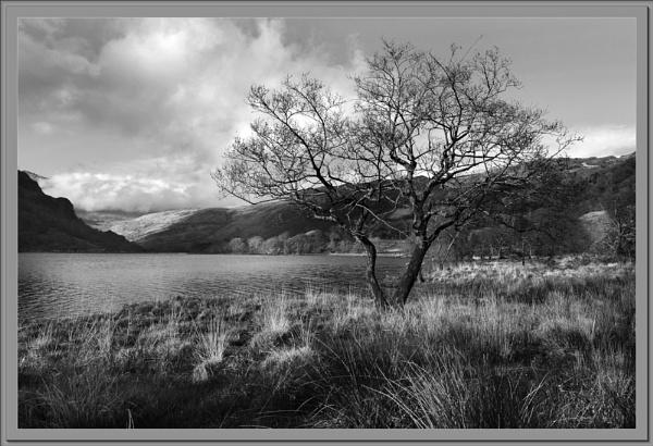Llyn Gwynant by Bridie